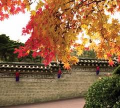 Seasonal Celebrations in Seoul