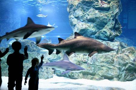 coex-aquarium-th
